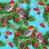 Winter bird, fir branch and rowan. Seamless pattern of Winter bird and fir branch and rowan Royalty Free Stock Images