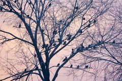 Winter bird group. Many birds fall on the winter branches Royalty Free Stock Images