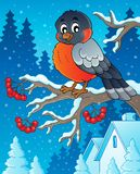 Winter bird theme image 1 Royalty Free Stock Photography