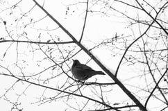 Winter bird Stock Photos