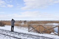 Winter birding in a marshland. Male birder watching in a wetland at the swedish island Oland royalty free stock images