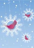 Winter birds. Vector illustration of redhead birds swinging on snowflakes Stock Photo