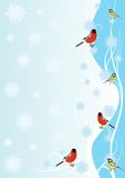 Winter birds Stock Images