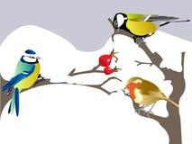 Winter birds Royalty Free Stock Photos