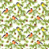 Winter birds at branches of fir tree. Seamless pattern. Watercolor Stock Photo