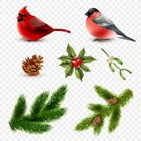 Winter Birds Fir Branches Set. Set of winter birds red cardinal and bullfinch with fir branches  on transparent background vector illustration Stock Images