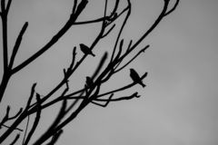 In the winter, the birds rest in a big tree together. stock photo