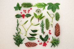 Winter-Blätter mit Stechpalme und Mistelzweig stockfoto