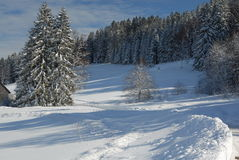 Winter in Black Forest Royalty Free Stock Photo