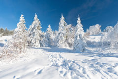 Winter in the Black Forest Stock Photos
