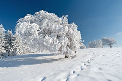 Winter in the Black Forest Royalty Free Stock Photo