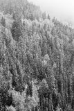 Winter Black Forest Stock Photos