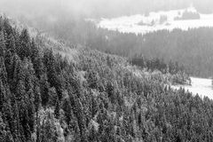 Winter Black Forest Stock Photography