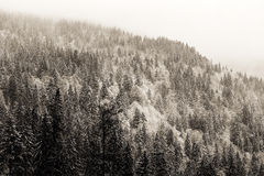 Winter Black Forest Stock Photo