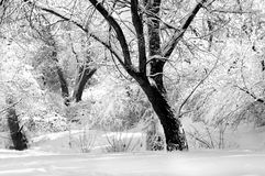 Winter in black and white Stock Image
