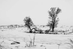 Winter black-white landscape. Horizontal lonely overcast. Postcard view royalty free stock photo