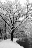 Winter in black and white Royalty Free Stock Images