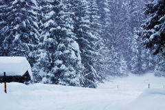 Winter, blizzard on the Austrian Alps Royalty Free Stock Images