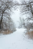 Winter blizzard Royalty Free Stock Image