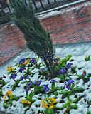 Winter bloom Stock Image