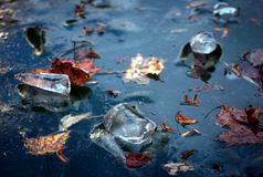 Winter blue ice and maple leaves frozen in river. Winter Ice pieces and maple leaves in frozen blue water Stock Images
