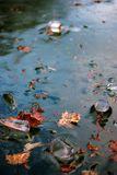 Winter blue ice and maple leaves frozen in river Royalty Free Stock Photo