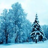 Winter blue landscape Stock Photo