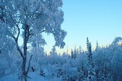 Winter blue pastel landscape. Sunset Royalty Free Stock Image