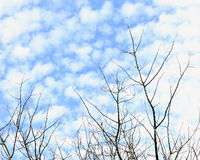 Winter Blue Sky. Bare trees contrast against a winters blue cloudy sky royalty free stock photos