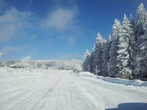 Winter. Blue, sky, forest Royalty Free Stock Photos