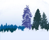 Winter blue, white and green snowy panoramic forest landscape with frozen conifers Royalty Free Stock Photography