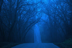 Winter Blues royalty free stock images