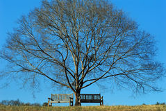 Winter blues tree and benches Royalty Free Stock Images