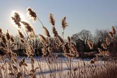 Winter-Blumen-Eklipse Lizenzfreies Stockbild