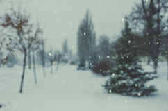 Winter, blur spruce trees, bokeh, falling snow. Defocused background Stock Photography