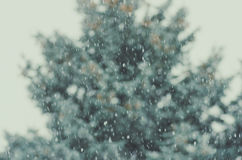 Winter, blur spruce trees, bokeh, falling snow. Defocused background Royalty Free Stock Image
