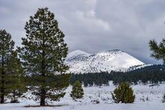 Winter in Bonito Park Stock Image