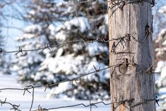 Winter border area of the country in the forest barbed wire. And snow royalty free stock photography