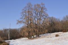 Winter. Botanical Garden, Iasi (Romania), january 2012 Stock Photography