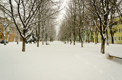 Winter boulevard is in a little small town. Stock Photography