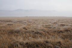 Winter brüniertes Gras wird mit Frost an einem nebeligen Tag mit Bergen im Hintergrund bedeckt stockfotografie