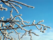 Winter branch. On blue sky Royalty Free Stock Photos