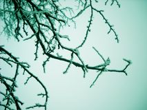 Winter branch background Royalty Free Stock Photos