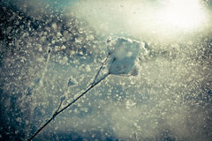Winter branch covered with snow fall Stock Photography