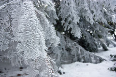 Winter branch in frost royalty free stock photography