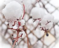 Winter branch royalty free stock photography