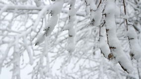 Winter branch moves in the wind. stock video footage