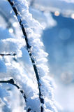 Winter - branch with snow Stock Image