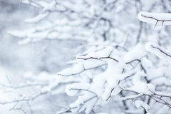 Winter branch with snow Royalty Free Stock Images