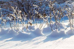 Winter branch with snow Royalty Free Stock Image